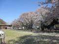 デイサービス長寿園  4月の活動内容