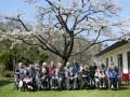 長寿の森の桜が見頃を迎えました。 4月21日