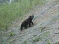 熊が出没! ワナを設置して頂きました 6月15日